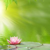 lotus-serenite
