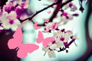 rula-sibai-pink-flowers3